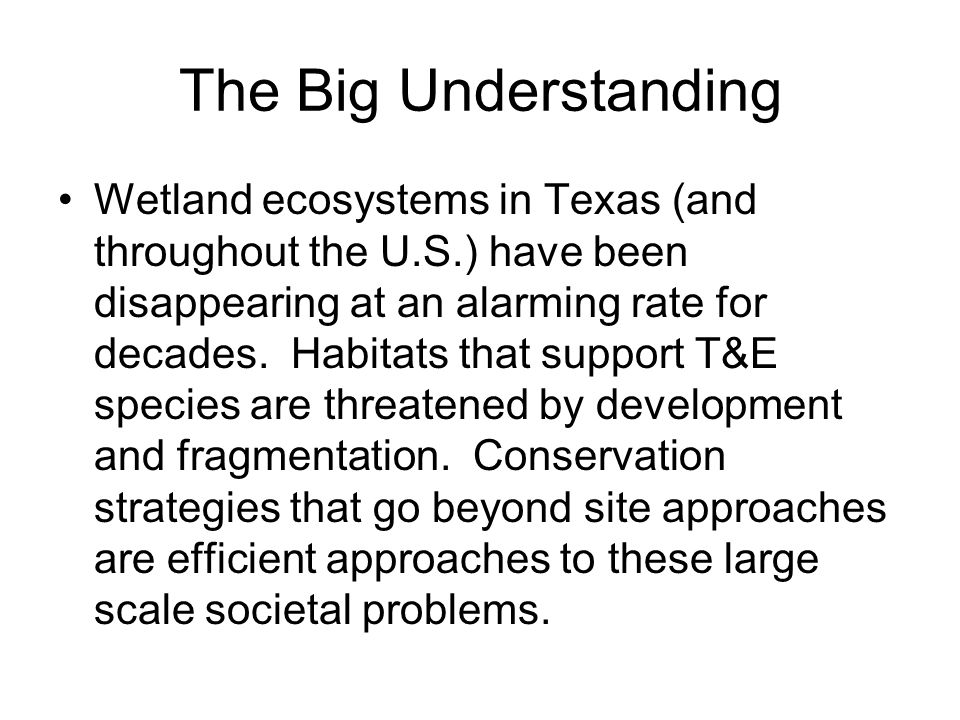 The Big Understanding Wetland ecosystems in Texas (and throughout the U.S.) have been disappearing at an alarming rate for decades. Habitats that supp