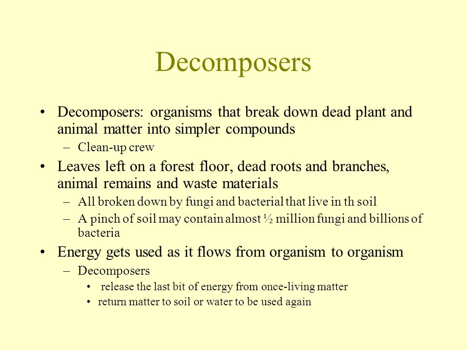 Decomposers Decomposers: organisms that break down dead plant and animal matter into simpler compounds –Clean-up crew Leaves left on a forest floor, d