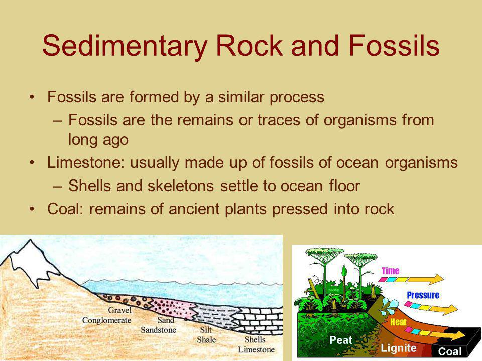 Sedimentary Rock and Fossils Fossils are formed by a similar process –Fossils are the remains or traces of organisms from long ago Limestone: usually