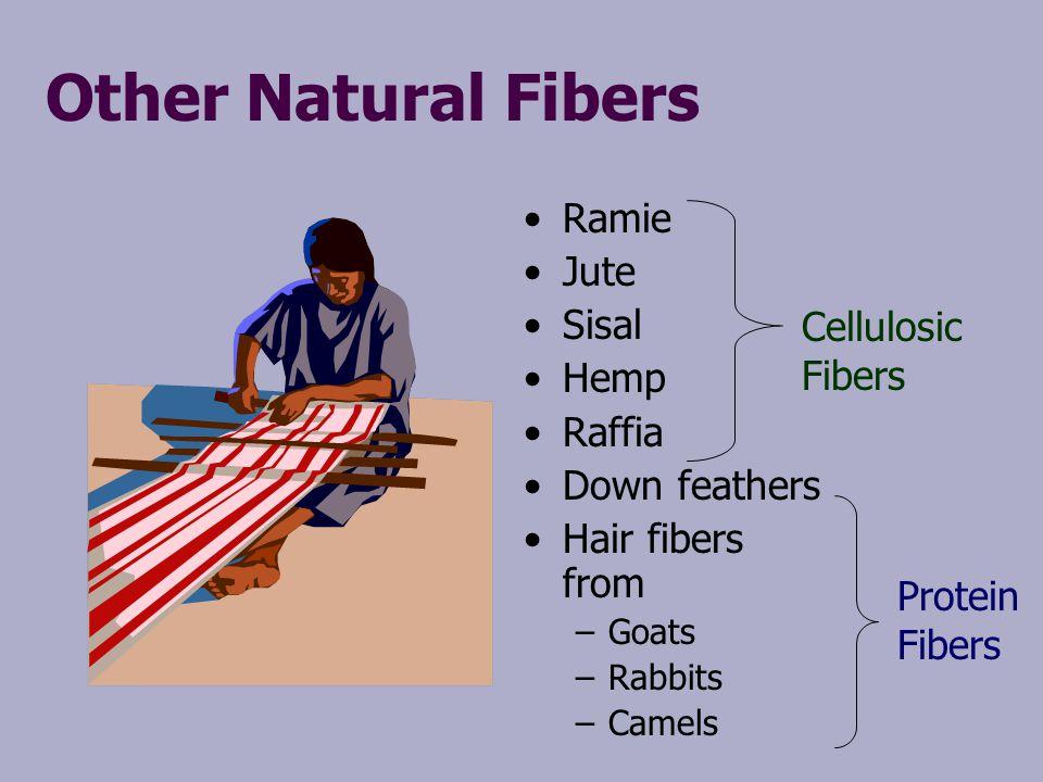 Other Natural Fibers Ramie Jute Sisal Hemp Raffia Down feathers Hair fibers from –Goats –Rabbits –Camels Cellulosic Fibers Protein Fibers