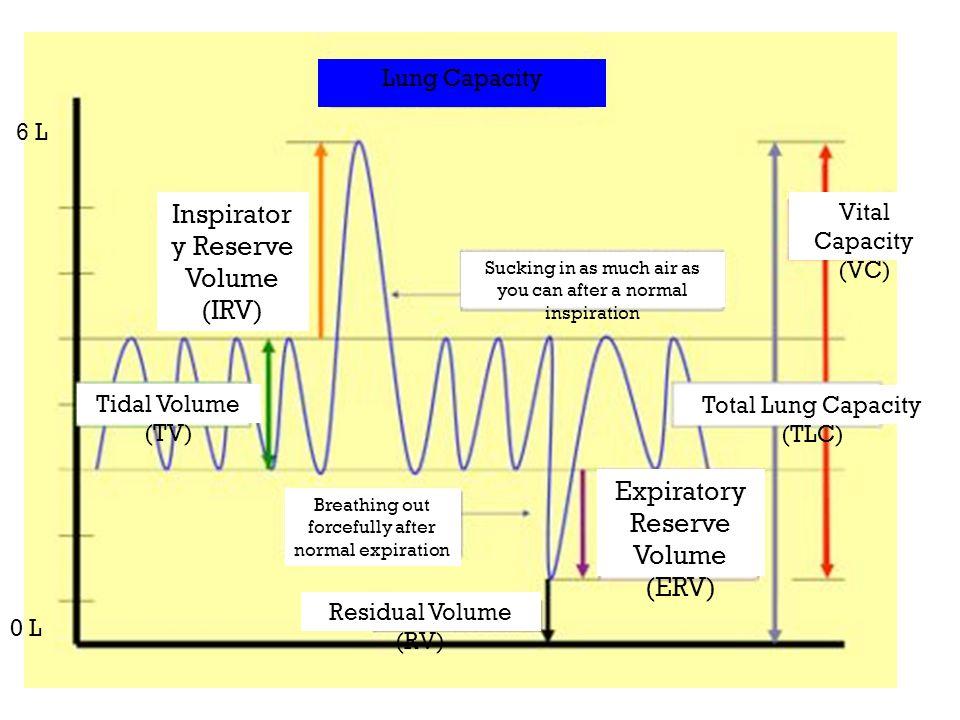 8 Lung Capacity Inspirator y Reserve Volume (IRV) Expiratory Reserve Volume (ERV) Total Lung Capacity (TLC) Residual Volume (RV) Tidal Volume (TV) Vit