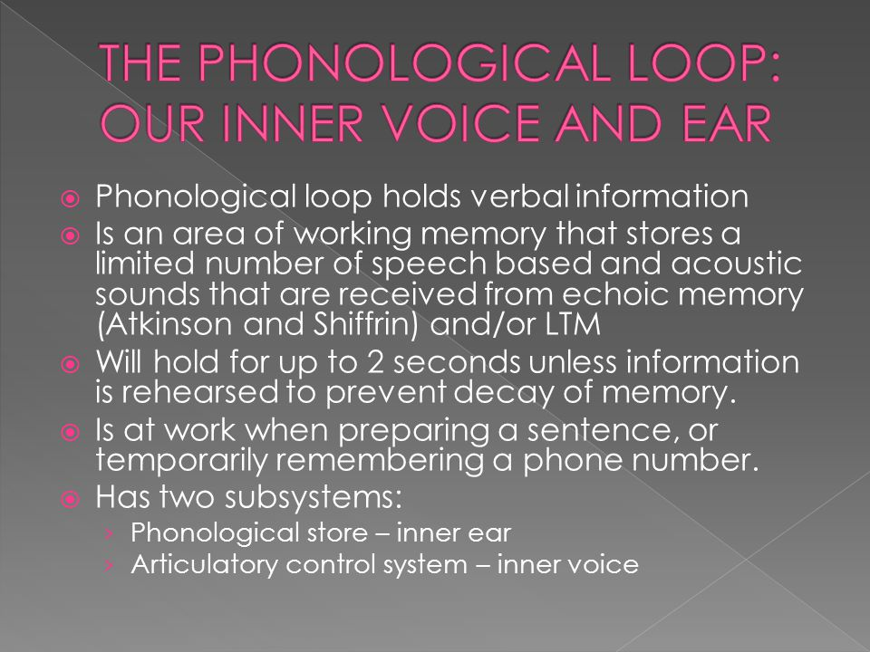  Phonological loop holds verbal information  Is an area of working memory that stores a limited number of speech based and acoustic sounds that are received from echoic memory (Atkinson and Shiffrin) and/or LTM  Will hold for up to 2 seconds unless information is rehearsed to prevent decay of memory.