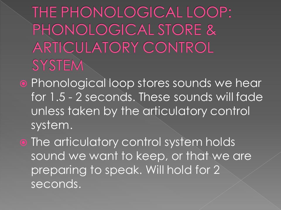  Phonological loop stores sounds we hear for 1.5 - 2 seconds.