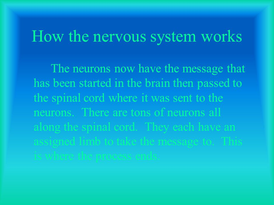 How the nervous system works The neurons now have the message that has been started in the brain then passed to the spinal cord where it was sent to the neurons.