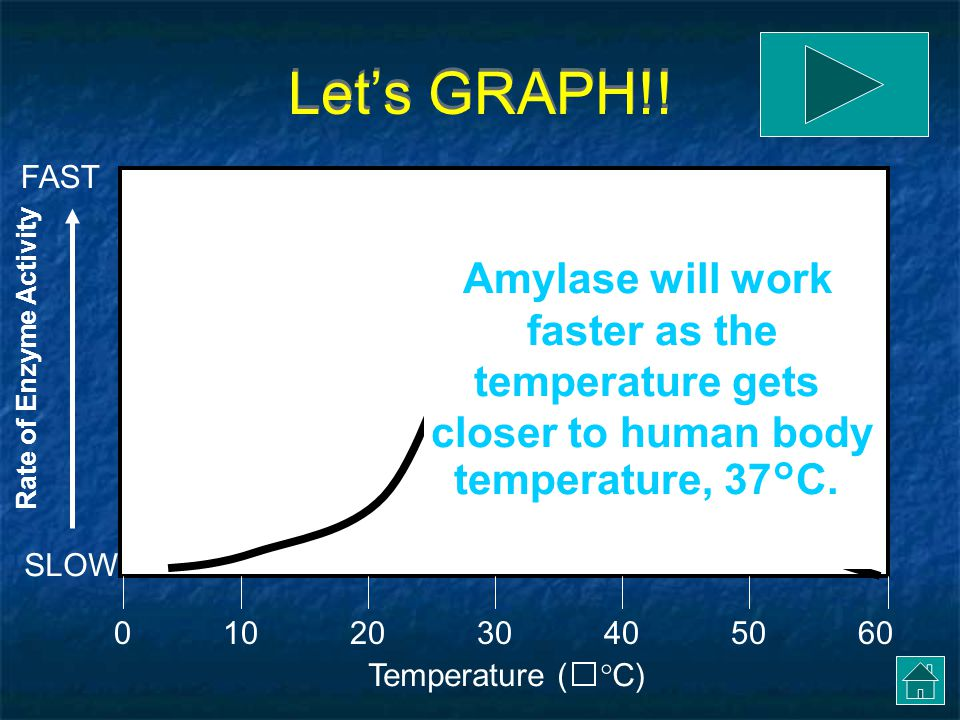 Let's GRAPH!.Temperature (  C) 0205060104030 SLOW FAST Amylase works slowly at low temperatures.