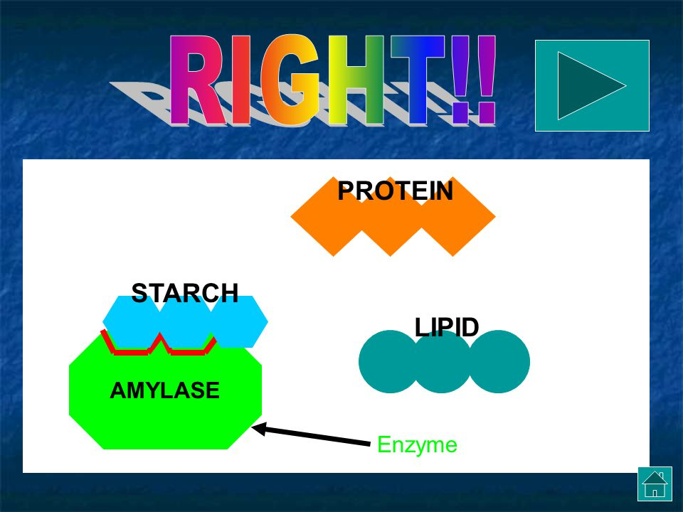 AMYLASE STARCHPROTEIN LIPID Try again.. Enzyme It doesn't look like the protein molecule fits!
