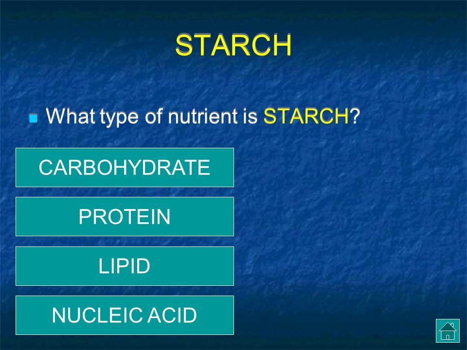 AMYLASE PROTEIN LIPID STARCH Enzyme