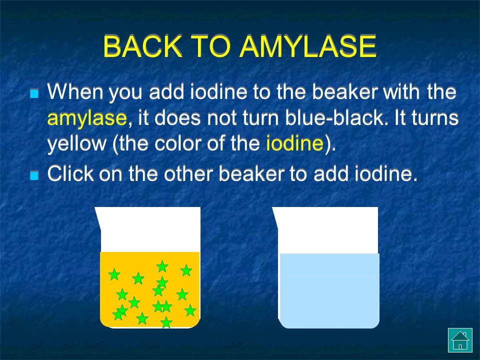 BACK TO AMYLASE In reality, enzyme molecules are microscopic (too small to see).