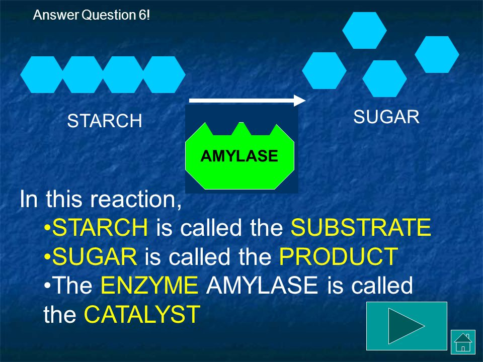 THE REACTION AMYLASE breaks down STARCH into its subunits, which are simple sugars.