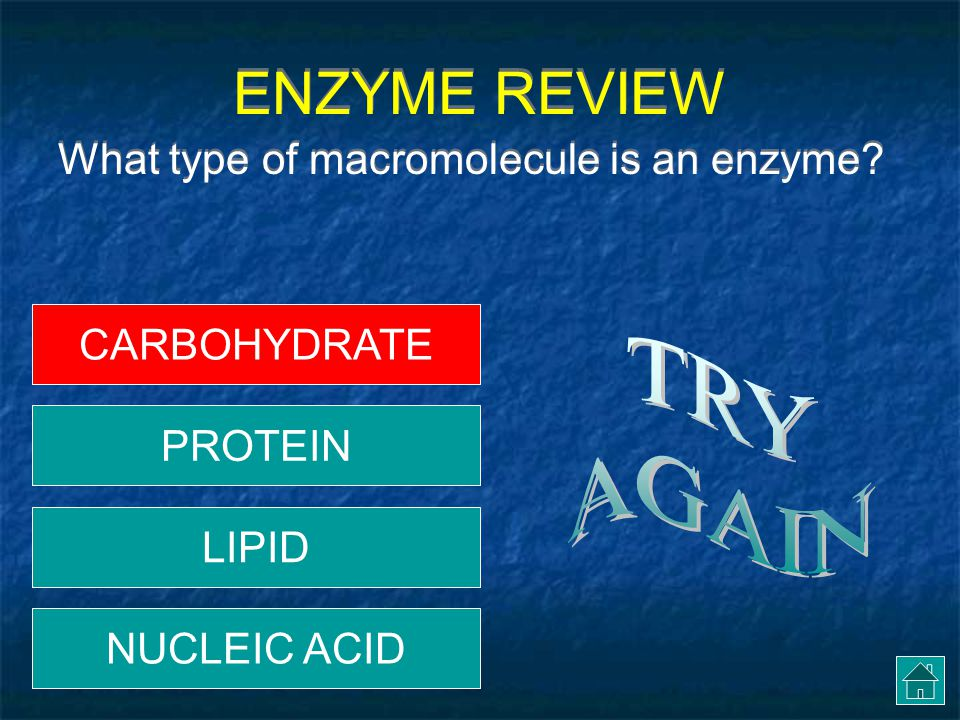 ENZYME REVIEW What type of macromolecule is an enzyme.