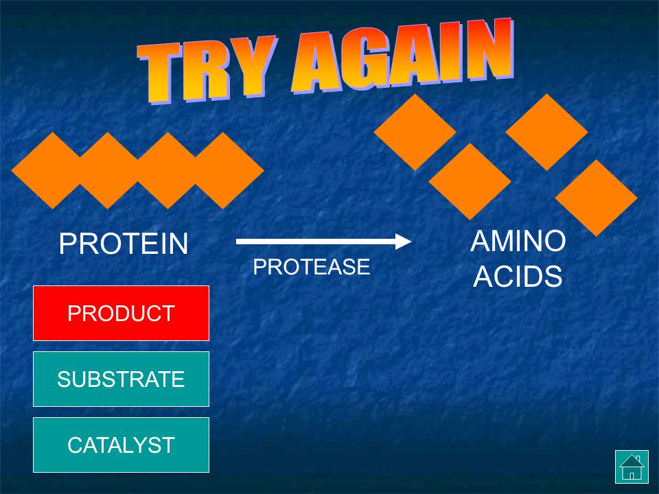 In this reaction, the PROTEIN is the… PROTEIN AMINO ACIDS PROTEASE PRODUCT CATALYST SUBSTRATE