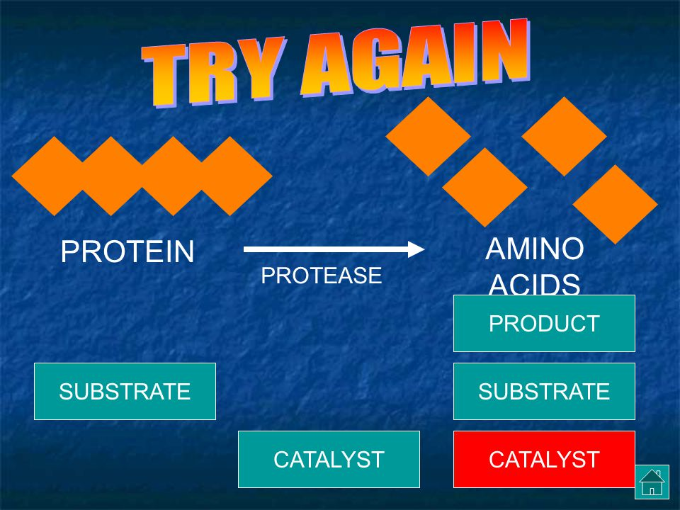 PROTEIN AMINO ACIDS PROTEASE CATALYST SUBSTRATE PRODUCT CATALYST SUBSTRATE