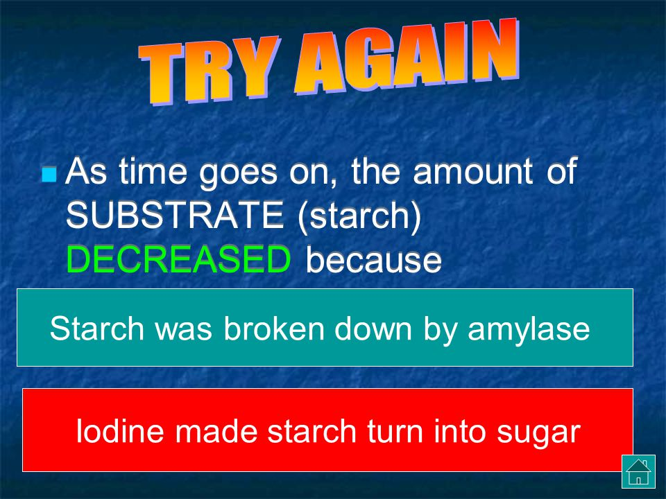 SUMMARIZE THE GRAPH As time goes on, the amount of SUBSTRATE (starch) DECREASED because Starch was broken down by amylase Iodine made starch turn into sugar