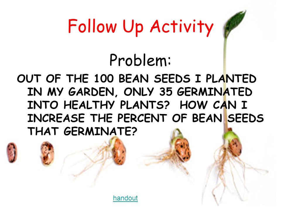 Follow Up Activity Problem: OUT OF THE 100 BEAN SEEDS I PLANTED IN MY GARDEN, ONLY 35 GERMINATED INTO HEALTHY PLANTS.