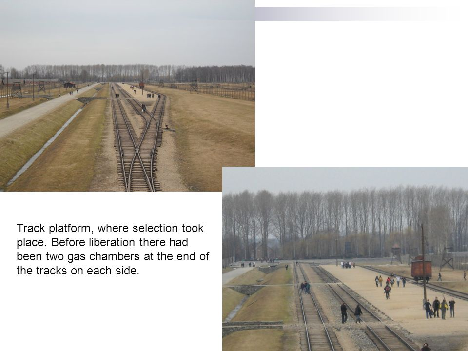 Tracks leading into Birkenau