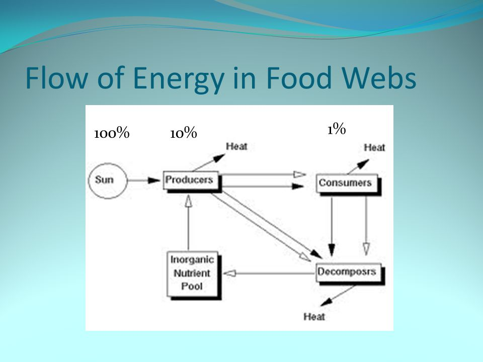 Flow of Energy in Food Webs 100%10% 1%