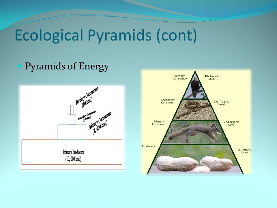 Ecological Pyramids (cont) Pyramids of Energy