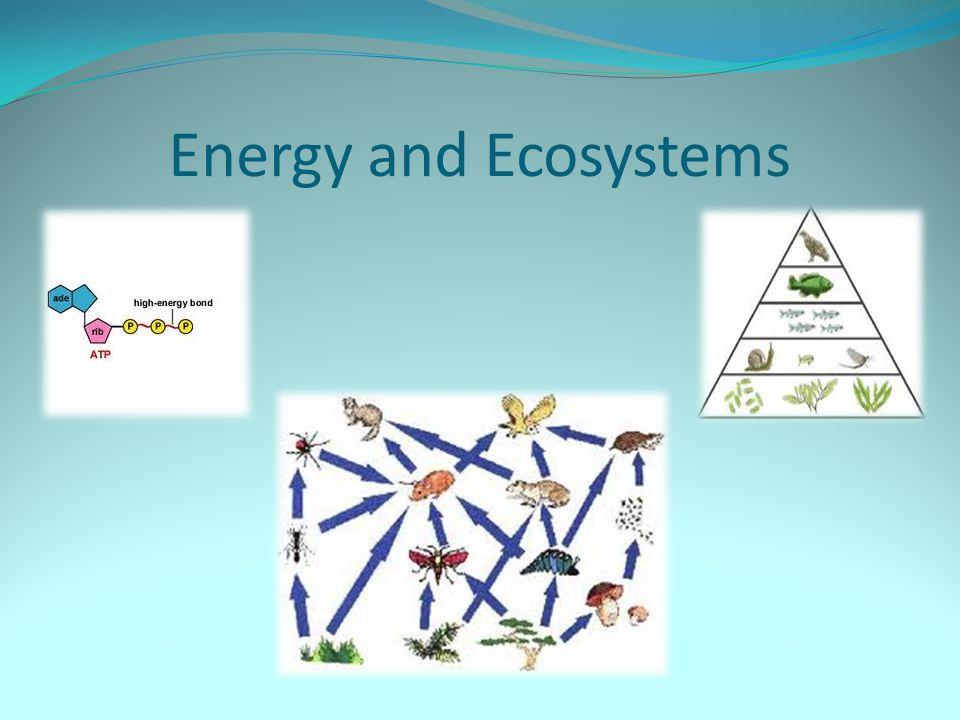 Ecological Pyramids (cont) Pyramids of Energy
