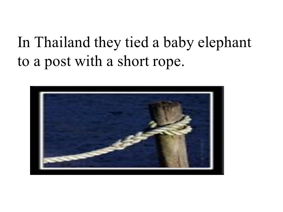 The elephant was tied to that post for a year or so. There came …