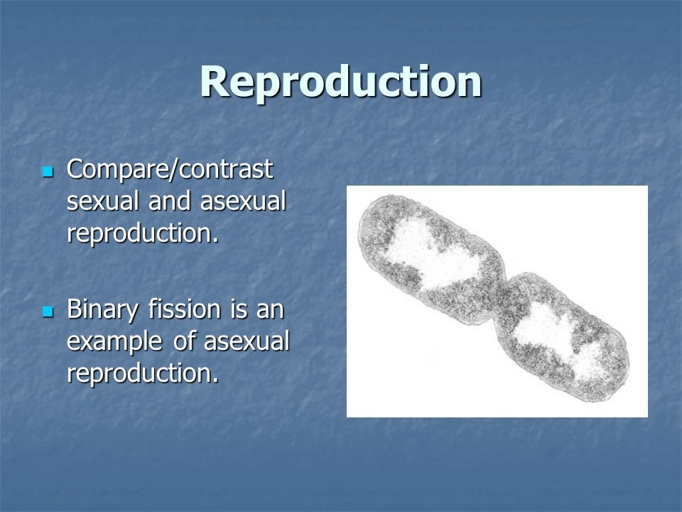 Reproduction Compare/contrast sexual and asexual reproduction. Compare/contrast sexual and asexual reproduction. Binary fission is an example of asexu