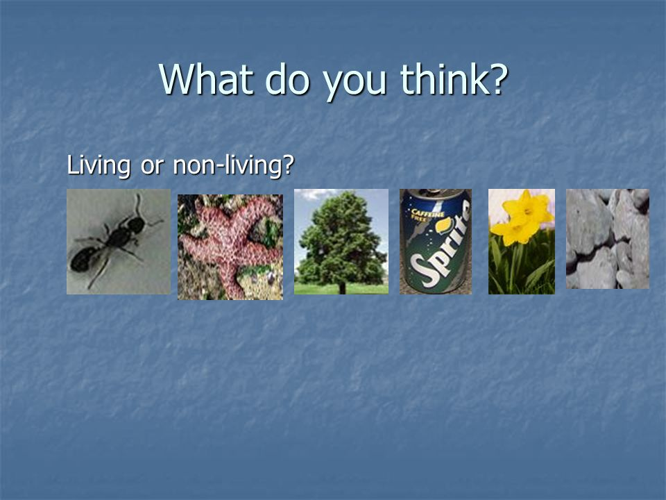 What do you think? Living or non-living?