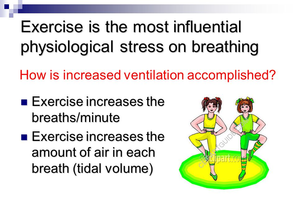 Exercise is the most influential physiological stress on breathing Exercise increases the breaths/minute Exercise increases the breaths/minute Exercise increases the amount of air in each breath (tidal volume) Exercise increases the amount of air in each breath (tidal volume) How is increased ventilation accomplished?