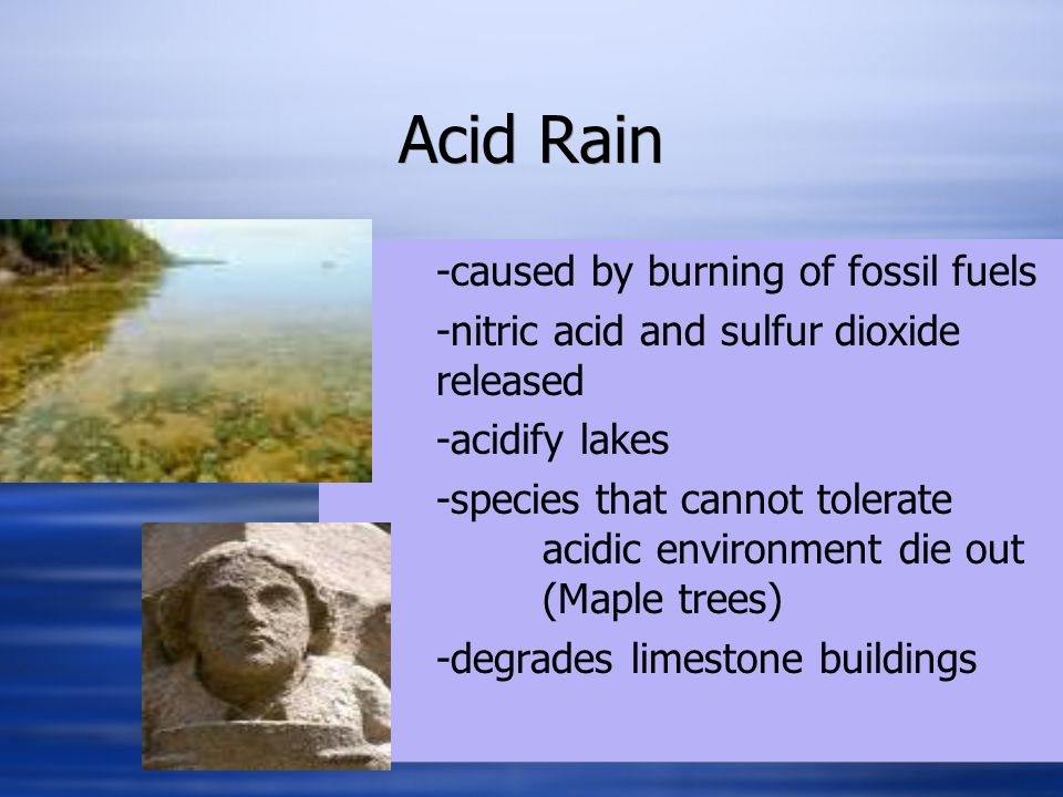 Acid Rain -caused by burning of fossil fuels -nitric acid and sulfur dioxide released -acidify lakes -species that cannot tolerate acidic environment die out (Maple trees) -degrades limestone buildings -caused by burning of fossil fuels -nitric acid and sulfur dioxide released -acidify lakes -species that cannot tolerate acidic environment die out (Maple trees) -degrades limestone buildings