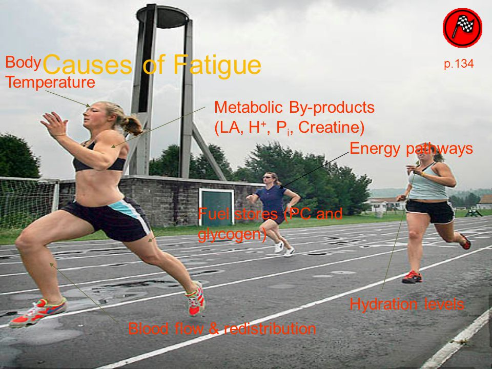 Fuel stores (PC and glycogen) Metabolic By-products (LA, H +, P i, Creatine) Energy pathways Causes of Fatigue p.134 Hydration levels Blood flow & red