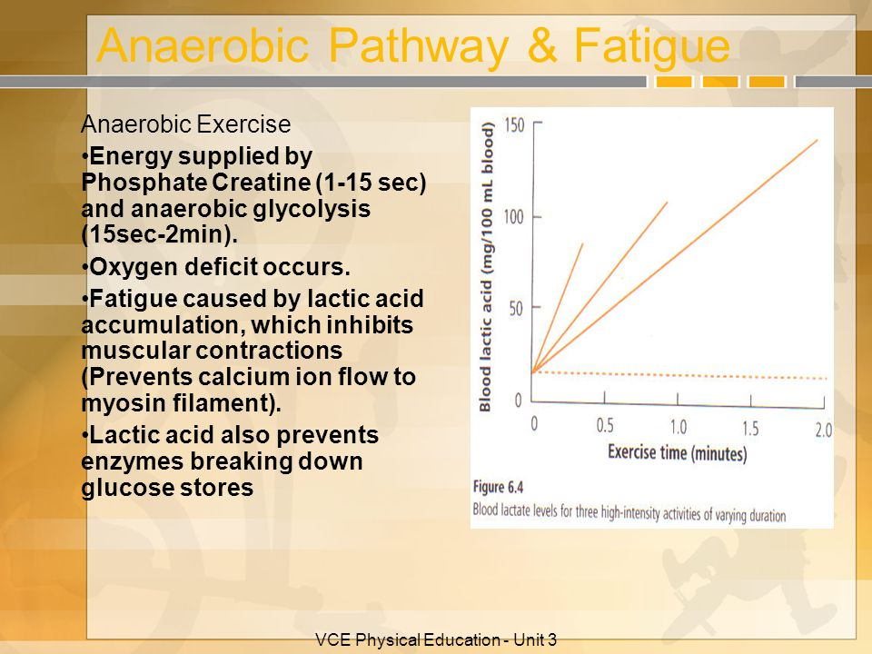VCE Physical Education - Unit 3 Anaerobic Pathway & Fatigue Anaerobic Exercise Energy supplied by Phosphate Creatine (1-15 sec) and anaerobic glycolys
