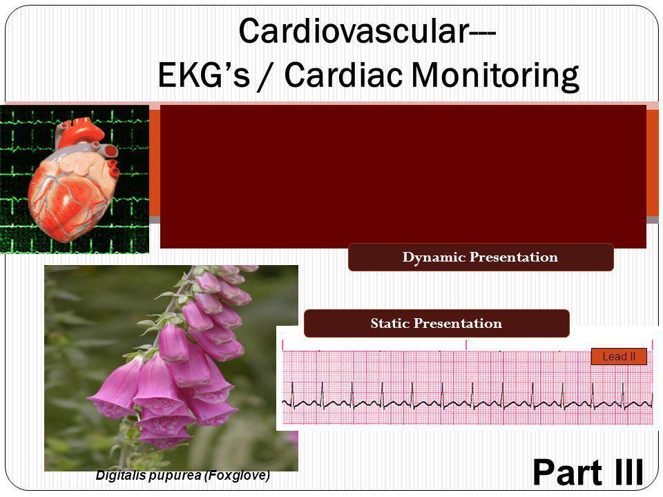Block 7.0 Module 2.4 Cardiovascular--- EKG's / Cardiac Monitoring Digitalis pupurea (Foxglove) Lead II Dynamic Presentation Static Presentation Part I