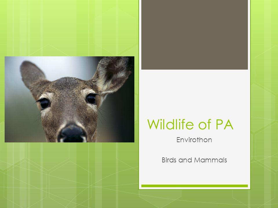 Wildlife of PA Envirothon Birds and Mammals