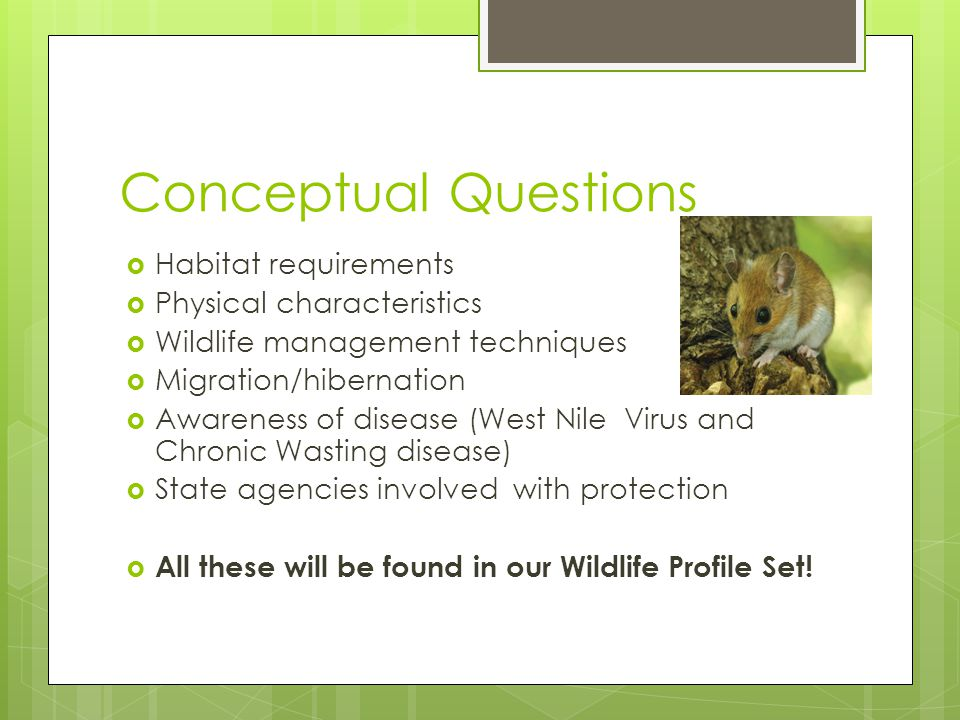 Conceptual Questions  Habitat requirements  Physical characteristics  Wildlife management techniques  Migration/hibernation  Awareness of disease (West Nile Virus and Chronic Wasting disease)  State agencies involved with protection  All these will be found in our Wildlife Profile Set!