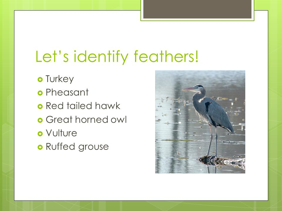 Let's identify feathers.