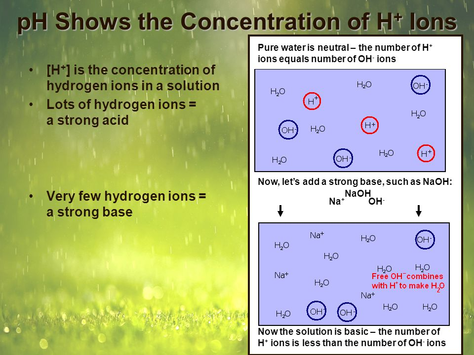 pH Shows the Concentration of H + Ions [H + ] is the concentration of hydrogen ions in a solution Lots of hydrogen ions = a strong acid –Gastric juice has an H + concentration of 1 x 10 -1, or.1 Very few hydrogen ions = a strong base –Ammonia has an H + concentration of 1 x 10 -12, or.000000000001 pH is the negative log of [H + ] –As pH gets lower, the [H + ] number gets higher