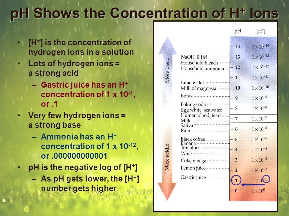 pH Shows the Concentration of H + Ions [H + ] is the concentration of hydrogen ions in a solution Lots of hydrogen ions = a strong acid –Gastric juice