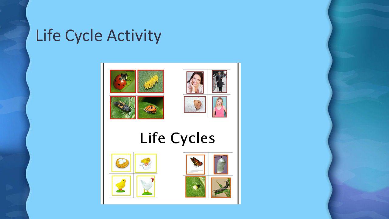 Life Cycle Activity