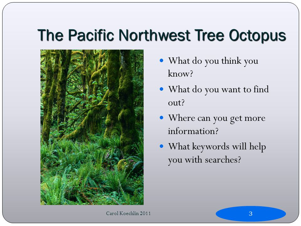 The Pacific Northwest Tree Octopus What do you think you know.
