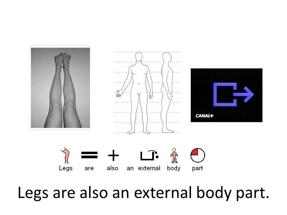 Legs are also an external body part.