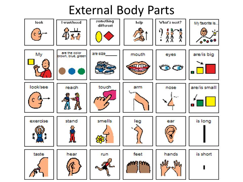 External Body Parts