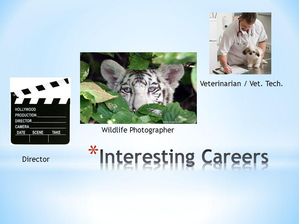 Veterinarian / Vet. Tech. Director Wildlife Photographer