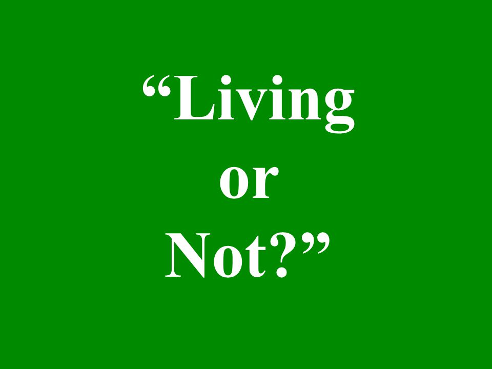 What do we call a living thing? A living thing is called an organism.