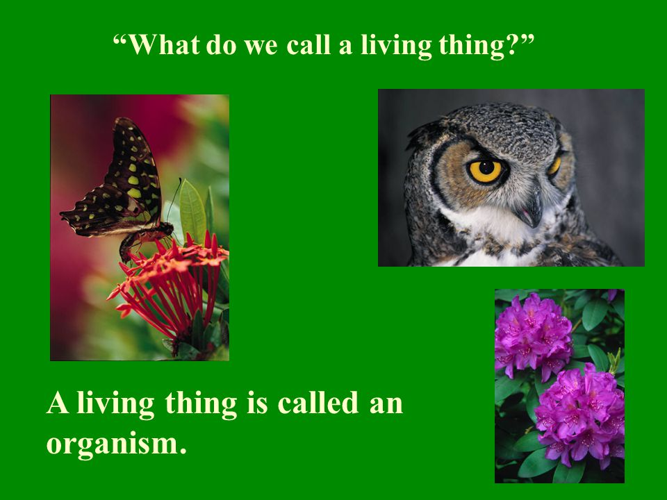 """""""What do we call a living thing?"""" A living thing is called an organism."""