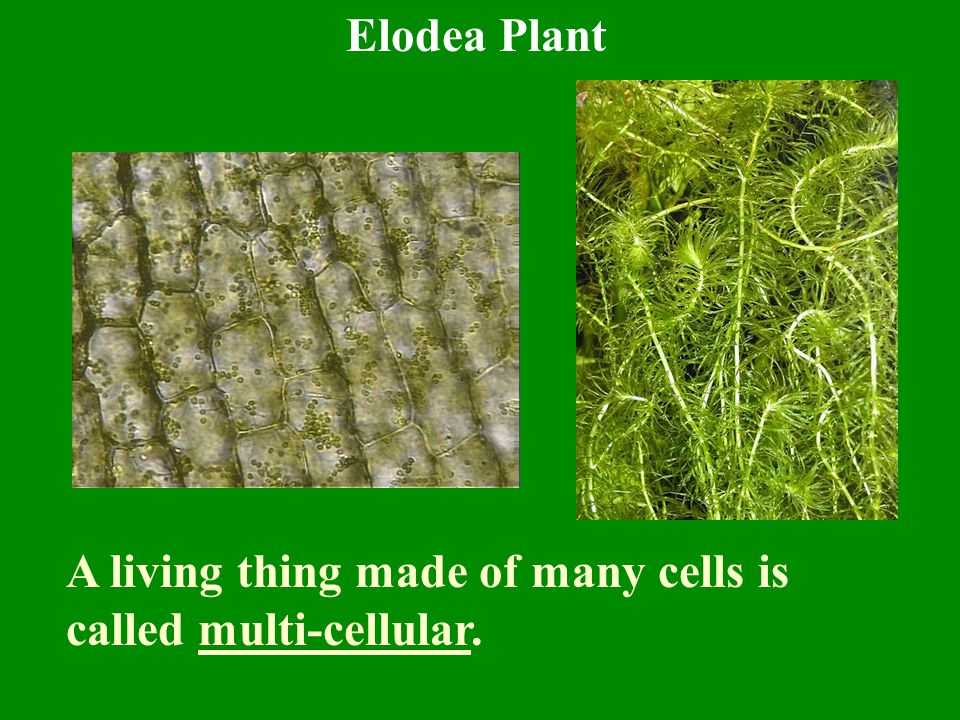 2.All living things are made of similar macromolecules and chemicals.