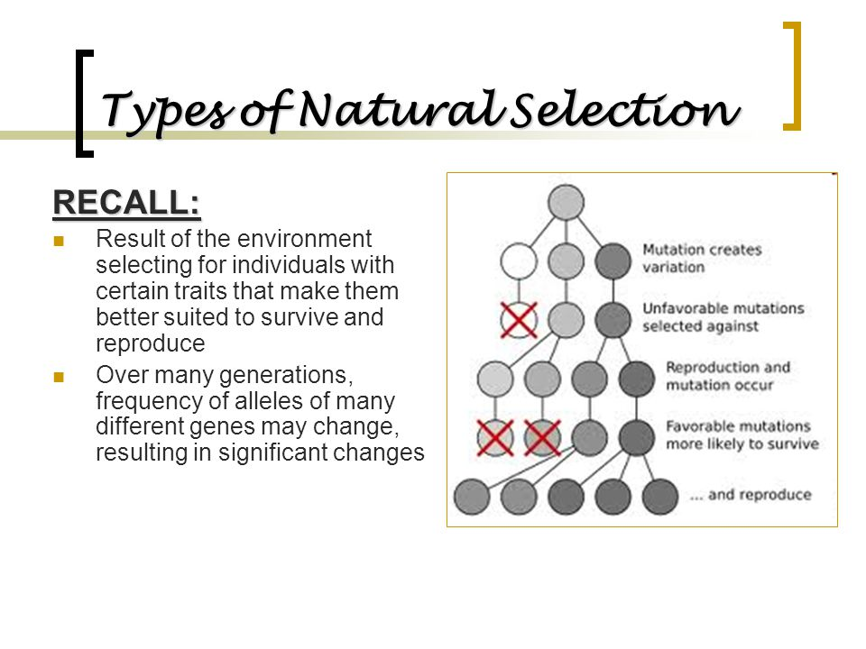 RECALL: Result of the environment selecting for individuals with certain traits that make them better suited to survive and reproduce Over many genera