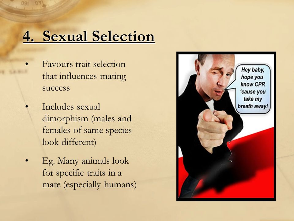 4. Sexual Selection Favours trait selection that influences mating success Includes sexual dimorphism (males and females of same species look differen