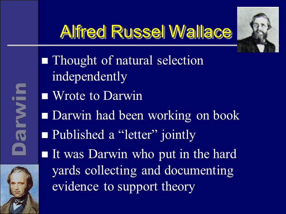 Alfred Russel Wallace n Thought of natural selection independently n Wrote to Darwin n Darwin had been working on book n Published a letter jointly n It was Darwin who put in the hard yards collecting and documenting evidence to support theory