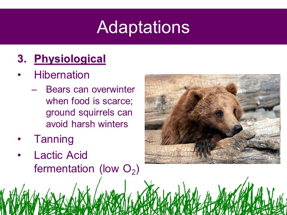 Adaptations 3.Physiological Hibernation –Bears can overwinter when food is scarce; ground squirrels can avoid harsh winters Tanning Lactic Acid fermentation (low O 2 )