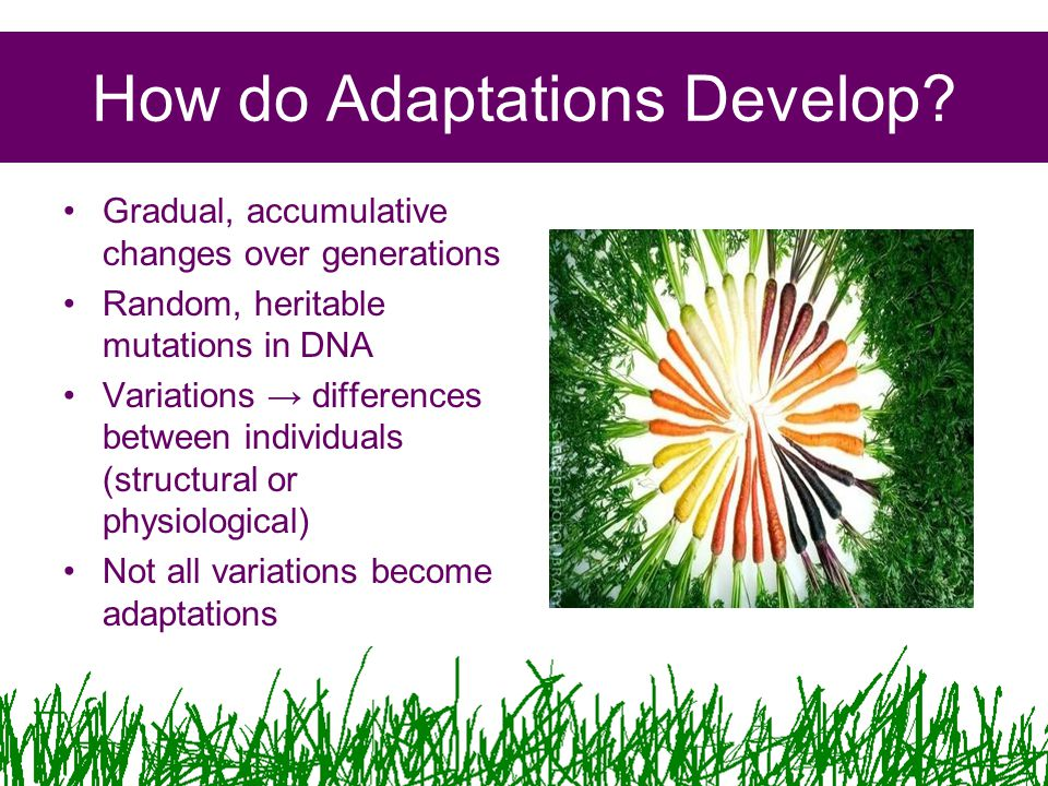 How do Adaptations Develop.