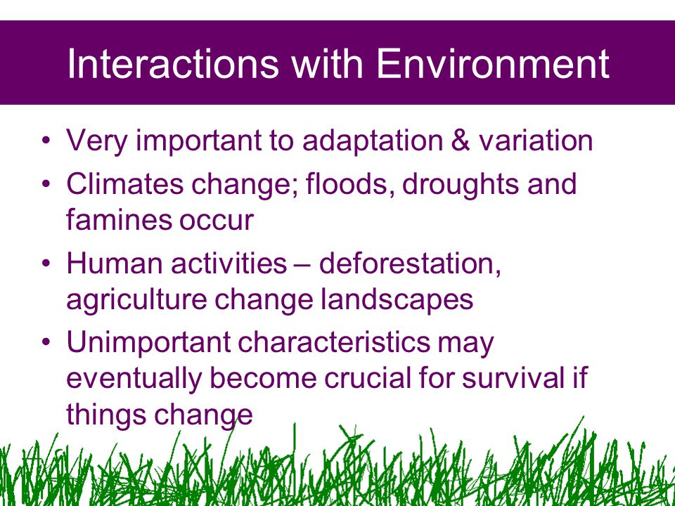 Interactions with Environment Very important to adaptation & variation Climates change; floods, droughts and famines occur Human activities – deforestation, agriculture change landscapes Unimportant characteristics may eventually become crucial for survival if things change