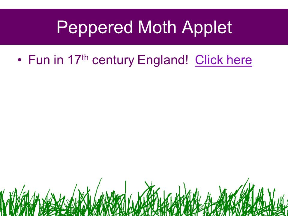 Peppered Moth Applet Fun in 17 th century England! Click hereClick here